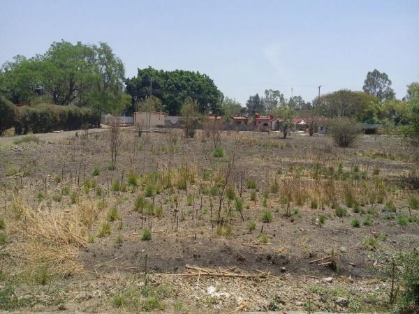 Villa de Ayala-Venadito,Morelos,Terreno,1031,venta casas,piscina,bienes raices,inmobiliaria